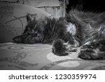 gray fluffy cat lying on the... | Shutterstock . vector #1230359974