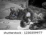 gray fluffy cat lying on the... | Shutterstock . vector #1230359977