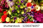 beautiful and colorful flowers ... | Shutterstock . vector #1230376057