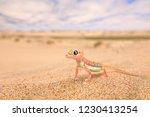 gecko from namib sand dune ... | Shutterstock . vector #1230413254