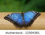 blue butterfly | Shutterstock . vector #12304381
