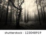 Spooky Old Tree In Dark Forest
