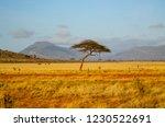 solitary tree landscape in...   Shutterstock . vector #1230522691