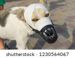 portrait of mixed breed dog in... | Shutterstock . vector #1230564067