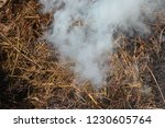 smoke  carbon dioxide from hay... | Shutterstock . vector #1230605764