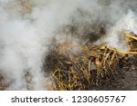 smoke  carbon dioxide from hay... | Shutterstock . vector #1230605767