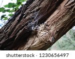 spider web  on the tree | Shutterstock . vector #1230656497