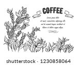 coffee plantation landscape and ... | Shutterstock .eps vector #1230858064
