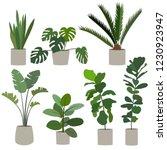 set of houseplant. monstera ...   Shutterstock .eps vector #1230923947