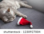 cute cat resting on sofa with a ...   Shutterstock . vector #1230927004