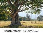 Fantastic Big Tree With Swing...