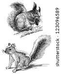 squirrels   Shutterstock . vector #123096589