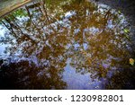 puddle like a water mirror... | Shutterstock . vector #1230982801