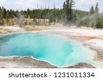 bright turquoise boiling and... | Shutterstock . vector #1231011334