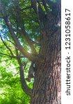 squirrel on tree | Shutterstock . vector #1231058617