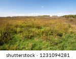 uncultivated and wild landscape ... | Shutterstock . vector #1231094281
