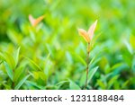 green leaf with blurred natural ... | Shutterstock . vector #1231188484