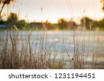 nature background background... | Shutterstock . vector #1231194451
