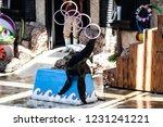 Sea Lion On Show