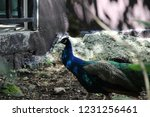 mexico  yucatan peninsula  ... | Shutterstock . vector #1231256461