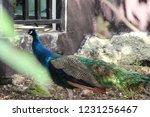 mexico  yucatan peninsula  ... | Shutterstock . vector #1231256467