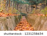 autumn leaves in the forest... | Shutterstock . vector #1231258654