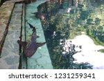 mexico  yucatan peninsula  ... | Shutterstock . vector #1231259341
