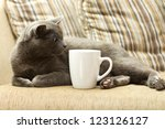 Gray Cat On A Sofa With White...