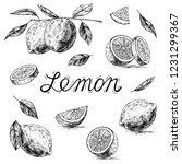 lemon. vector illustration of... | Shutterstock .eps vector #1231299367