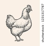 chicken  hen sketch. poultry... | Shutterstock .eps vector #1231317787