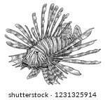 Lionfish Illustration  Drawing...