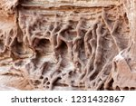 tafoni weathering in red... | Shutterstock . vector #1231432867
