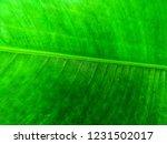 green leaf background | Shutterstock . vector #1231502017