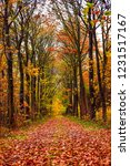 autumn in the forest | Shutterstock . vector #1231517167