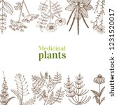 template with medicinal plants. ...   Shutterstock .eps vector #1231520017