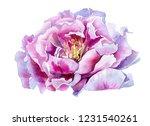 peony tender gorgeous pink... | Shutterstock . vector #1231540261