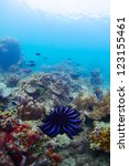 coral reef with blue big sea... | Shutterstock . vector #123155461