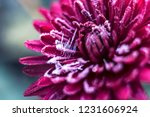 frost   frost first   frost on... | Shutterstock . vector #1231606924