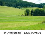 fields in schwarzwald   Shutterstock . vector #1231609501