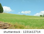 cows on the horizon  schwarzwald   Shutterstock . vector #1231612714