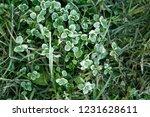 frozen plants and grass in... | Shutterstock . vector #1231628611