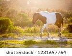 a wild pony  equus caballus ... | Shutterstock . vector #1231697764