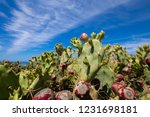 purple fig fruits in green...   Shutterstock . vector #1231698181
