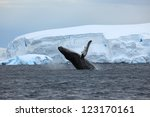 humpback whale in the antarctica | Shutterstock . vector #123170161