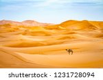 dromedary camel sahara desert... | Shutterstock . vector #1231728094