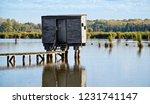 reflection below a bird watcher'... | Shutterstock . vector #1231741147