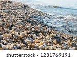 background of wet small multi... | Shutterstock . vector #1231769191