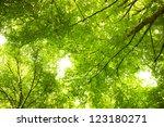 Under Greenery
