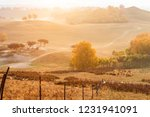 autumn grazing scenery on... | Shutterstock . vector #1231941091