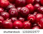 red cranberry berries as a... | Shutterstock . vector #1232022577
